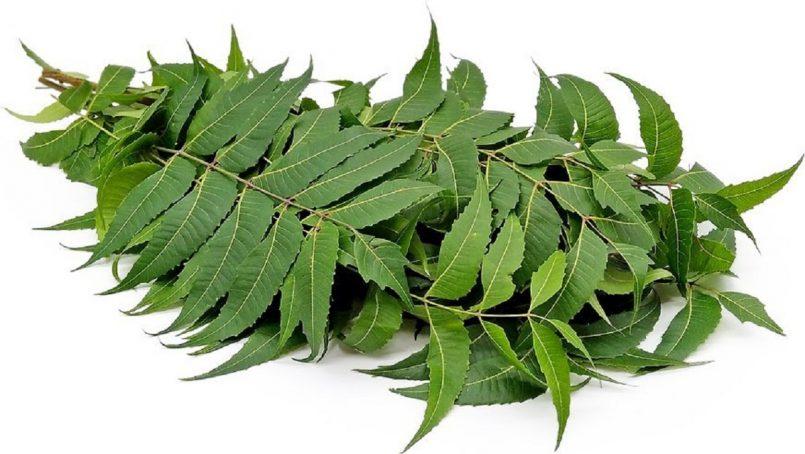 Benefits of Neem Leaves : नीम कई बीमारियों के लिए हैं रामबाण, जानिए इसके फायदे