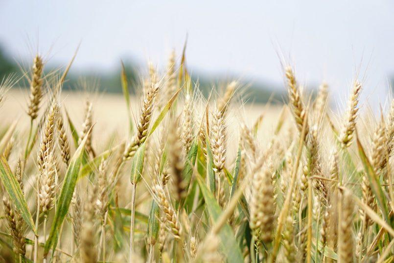 Benefits of Barley Water : दिन में सिर्फ एक गिलास जौ का पानी पीने से दूर हो सकती है कई बीमारियां, जानिए कैसे