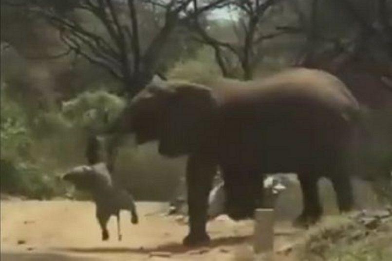 Elephant Viral Video