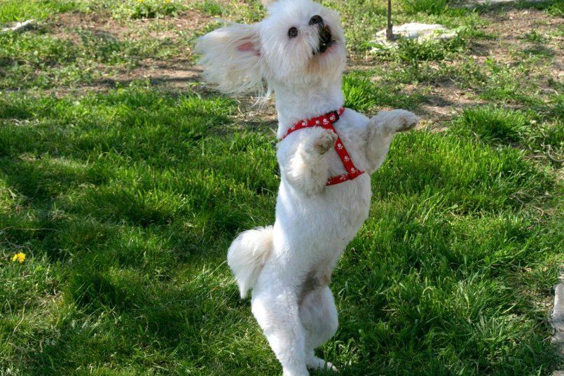 Dog Dance Video